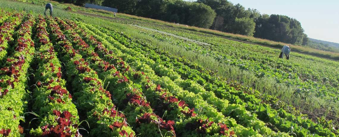 farm_5_Slider