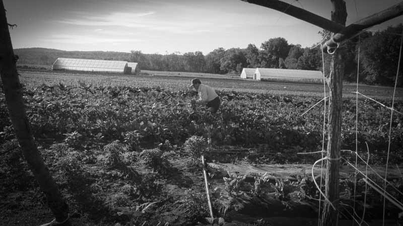 007-(2)FIX_crop
