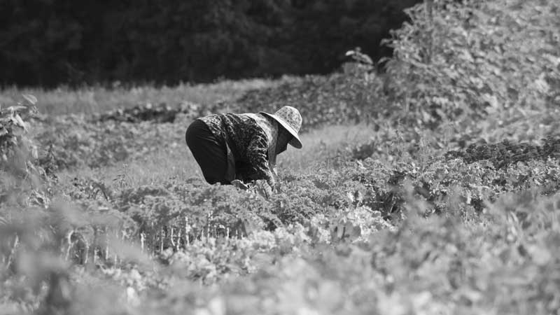 farmphotos-159FIX_crop